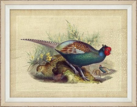 Pheasant Drawing 11 Santa Barbara
