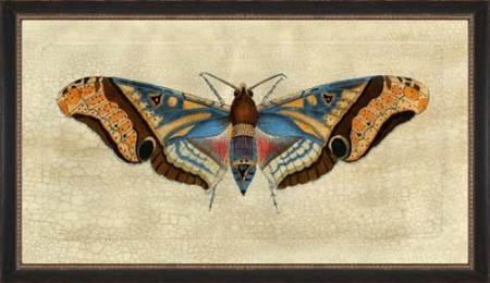 Moth Drawing 3 Santa Barbara