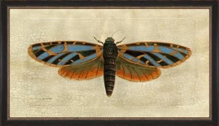 Moth Drawing 2 Santa Barbara
