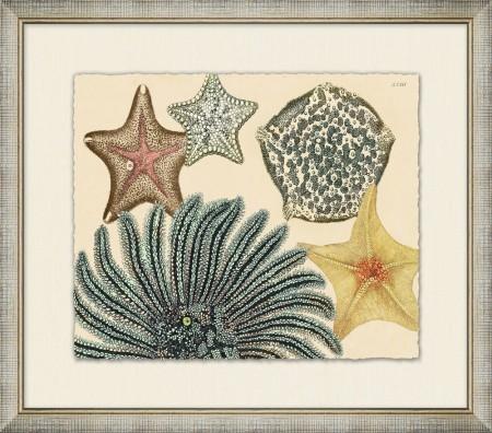 Sea Stars 3 Santa Barbara