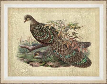 Pheasant Drawing 10 Santa Barbara