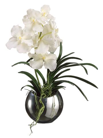 Vanda Orchid Santa Barbara