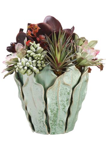 Succulents in Green Vase Santa Barbara