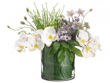 Phalaenopsis Allium Lilac Santa Barbara
