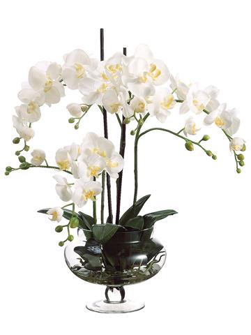 Phalaenopsis in Glass Jar Santa Barbara