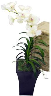 Planter Orchid Santa Barbara