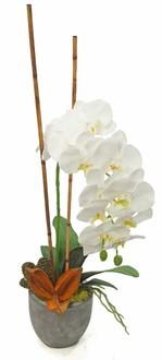 Orchid Moss Tree and Sora Santa Barbara