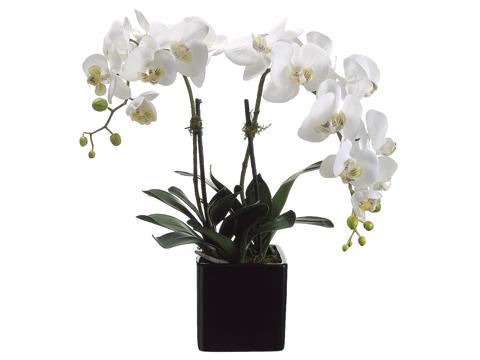 Orchid w: Ceramic Pot santa barbara design center 31852