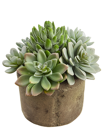 succulent green garden santa barbara design center 31848