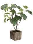 "Fine 32"" Fig Tree in Cement Planter Green. Our fantastic arrangements"