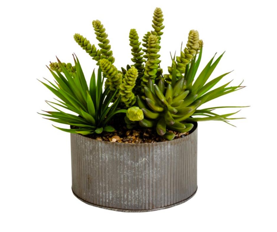 Tin Succulent