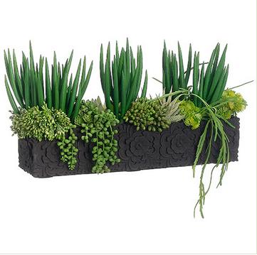 11' Avage Cactus Santa Barbara Design Center