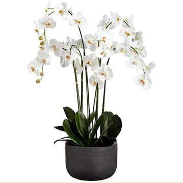 Riri Orchid Planter