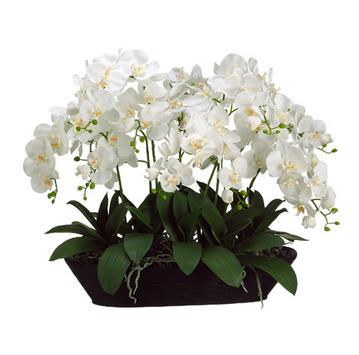 LG Phalaenopsis Planter