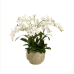 Orchid In Ceramic Pot