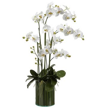 Orchid In Soil