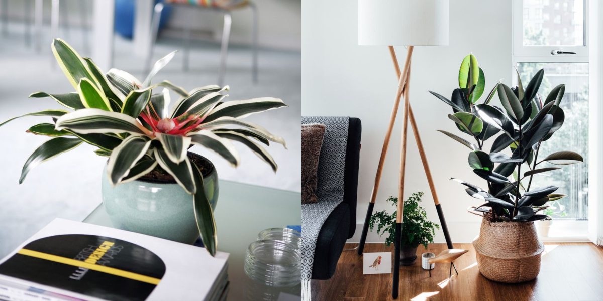 How To Pair Plants With Your Living Room Decor Santa Barbara Design Center