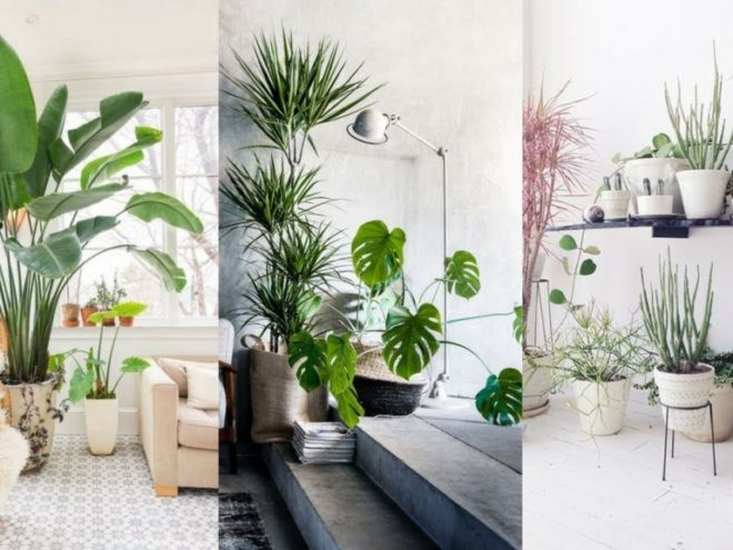 How To Pair Plants With Your Living Room Decor! Santa barbara design center -