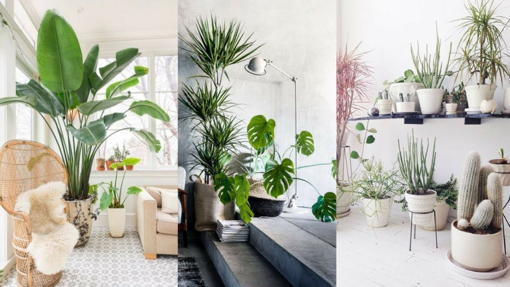 How To Pair Plants With Your Living Room Decor! | Santa Barbara Design Center