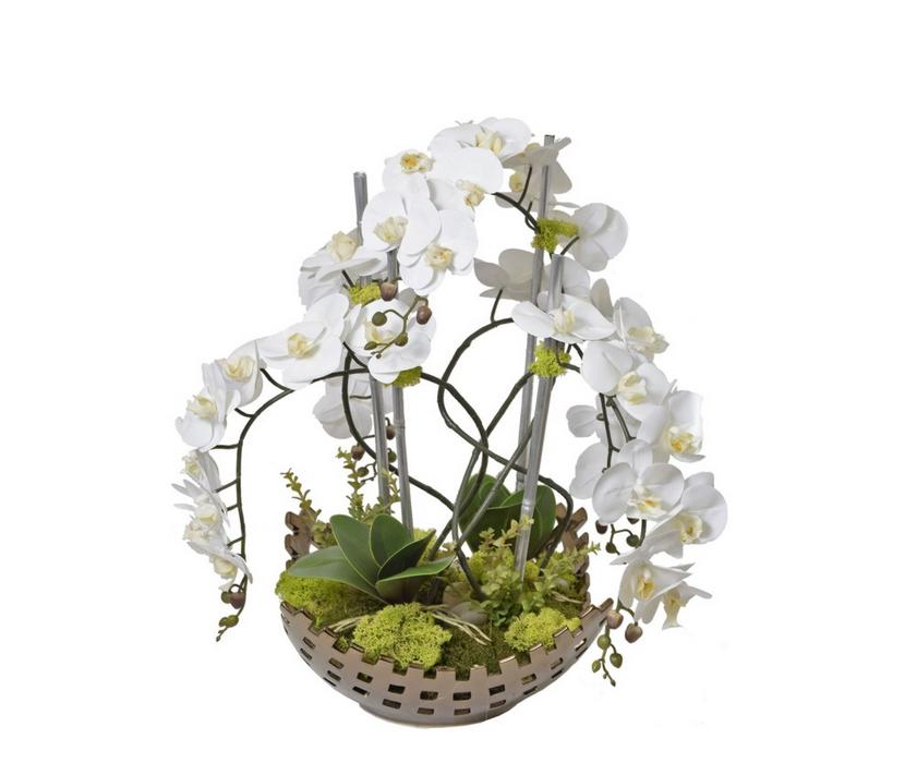 Slur Orchid